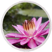 Tropical Night Flowering Water Lily Rose De Noche II Round Beach Towel