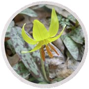 Trout Lily Wildflower - Erythronium Americanum Round Beach Towel
