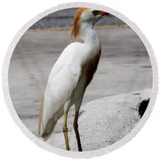 Trump Egret Round Beach Towel