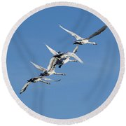 Trumpeter Swans Flying Round Beach Towel
