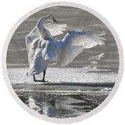 Trumpeters Wintering On The Thorne Round Beach Towel