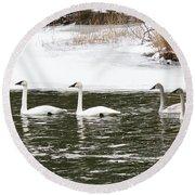 Trumpter Swans Panorama Round Beach Towel