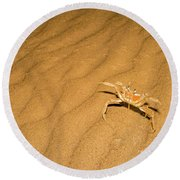 tufted ghost crab Ocypode cursor on sand Round Beach Towel