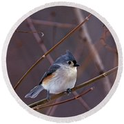 Tufted Titmouse In Winter Round Beach Towel