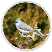 Tufted Titmouse On A Branch Round Beach Towel