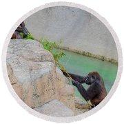 Tug-o-war Western Gorillas Round Beach Towel