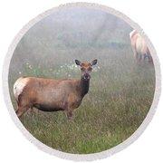 Tule Elk In Fog Round Beach Towel