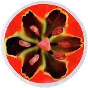 Tulip At Amatzia Forest - 4 Round Beach Towel