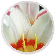 Tulip Flowers Art Prints 4 Spring White Tulip Flower Macro Floral Art Nature Round Beach Towel