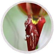 Tulip In Blossom 1 Round Beach Towel