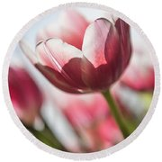 Pink Tulip Closeup Round Beach Towel
