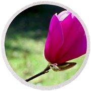 Tulip Tree Blossom Round Beach Towel