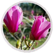 Tulip Tree Blossoms Round Beach Towel