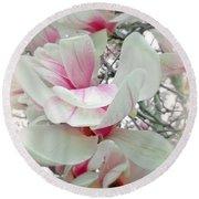 Tulip Tree Blossoms - Magnolia Liliiflora Round Beach Towel
