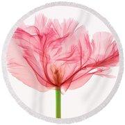 Tulip, X-ray Round Beach Towel