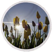 Tulips Blooming With Sun Star Burst Round Beach Towel