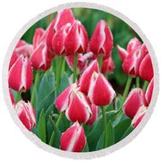 Tulips - Candy Apple Delight 02 Round Beach Towel