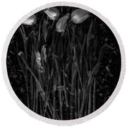 Tulips Decaying At Sunset Round Beach Towel