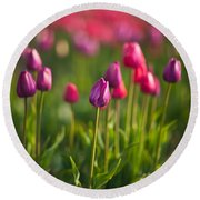 Tulips Dream Round Beach Towel