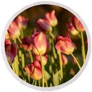 Tulips In Public Garden Round Beach Towel