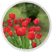 Tulips In Spring 3 Round Beach Towel