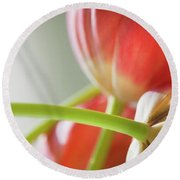 Tulips In The Morning Round Beach Towel by Theresa Tahara