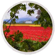 Tulips Secret Window Round Beach Towel