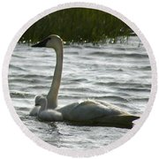 Tundra Swan And Signets Round Beach Towel