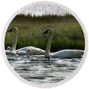 Tundra Swans And Cygents Round Beach Towel
