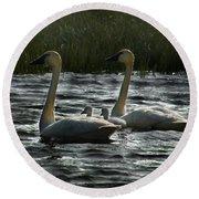 Tundra Swans Round Beach Towel
