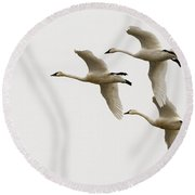 Tundra Swans In Flight 1 Round Beach Towel