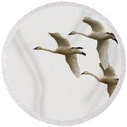 Tundra Swans In Flight 1 Round Beach Towel