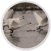 Tundra Swans Take Off Round Beach Towel