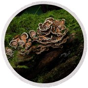 Turkey Tail Round Beach Towel