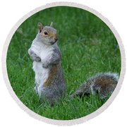Turning Squirrel Round Beach Towel