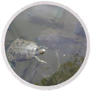 Turtle Amongst Fish Round Beach Towel
