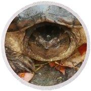 Turtle In Repose  Round Beach Towel