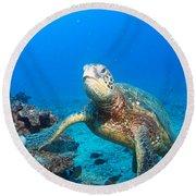 Turtle Portrait Round Beach Towel