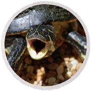 Turtle With His Mouth Wide Open  Round Beach Towel