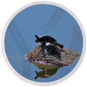 Turtles Tanning Round Beach Towel