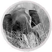Tusker In The Grass Round Beach Towel
