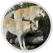 Twin Blond Wolves Round Beach Towel