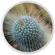 Twin Spined Cactus Round Beach Towel