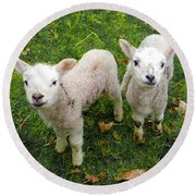 Twins - Spring Lambs Round Beach Towel