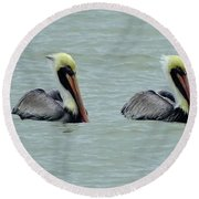 Twins Brown Pelican In Gulf Of Mexico Round Beach Towel