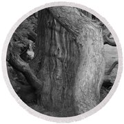 Twisted Old Tree Round Beach Towel