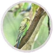 Two Adorable Budgie Parakeets Living In Nature Round Beach Towel