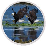 Two American Bald Eagle Touching Down At Low Tide Round Beach Towel