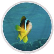 Two-banded Clownfish Round Beach Towel