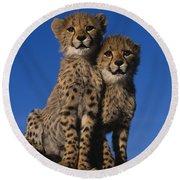 Two Cheetah Cubs Round Beach Towel